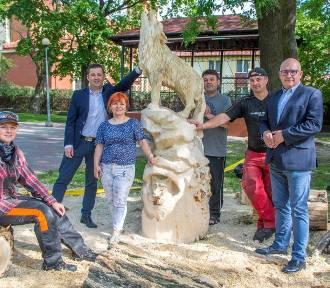 Leśne zwierzęta na stałe opanowały miejski park ZDJĘCIA