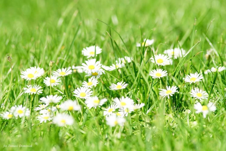 Rodzinnych wycieczek nie mogło zabraknąć również w Ogrodzie Botanicznym, gdzie poza bajkową zagrodą czekały kolorowe, kwieciste, pachnące wiosną akcenty