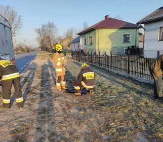 Strażacy uratowali psa, który zawisł na ogrodzeniu