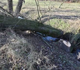 W Bronowicach drzewo przygniotło 45-latka. Jego stan jest ciężki
