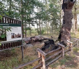 """""""Pomnik Głupoty Ludzkiej"""" można znaleźć w lesie niedaleko Głogowa. ZDJĘCIA"""