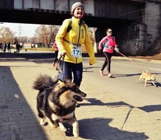 Wesoła Fala z psami! Dogtrekking odbędzie się w Mysłowicach