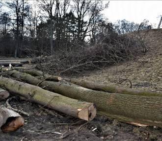 Zbąszyń: Wycinka drzew z wału północnego w miejskim parku - 5 marca 2021