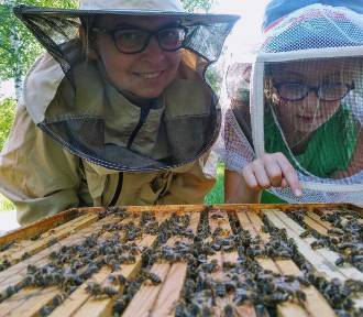 Cierpliwości i pracowitości nauczymy się od pszczół
