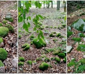 W gminie Dolice występują megality