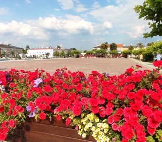 Lato w Tomaszowie w pełnej krasie. W wielu miejscach kwitną piękne kwiaty [ZDJĘCIA]