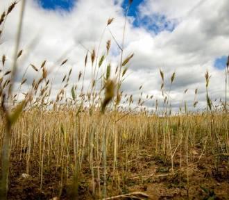 To już ostatni moment dla rolników na złożenie wniosku o pomoc suszową