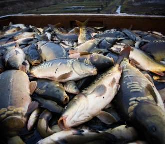 Zaloguj się mnóstwo ryb randkowych