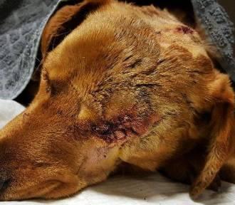 Skatował psa, a potem żywcem go zakopał. Policja szuka sprawcy