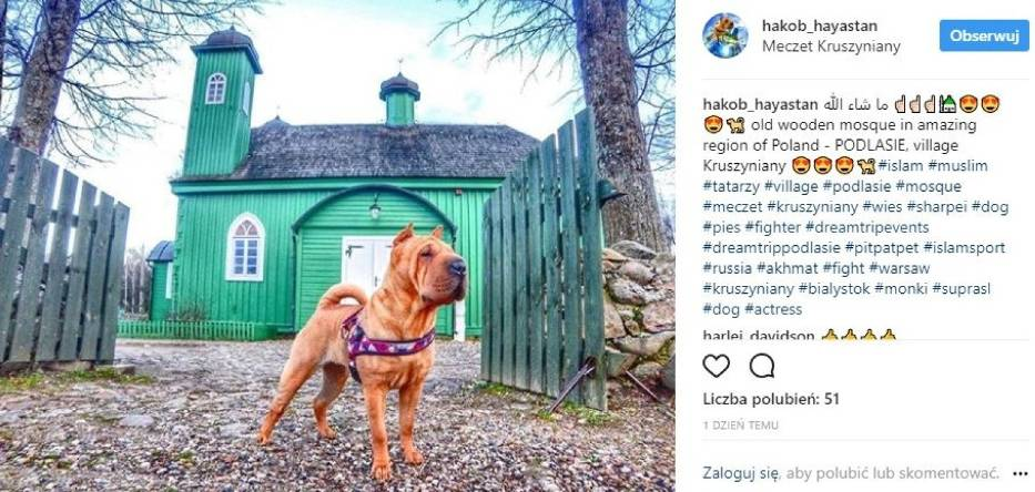 Pies Lilly gwiazdą Instagrama. Promuje Podlaskie