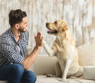 Oto najmądrzejsze rasy psów