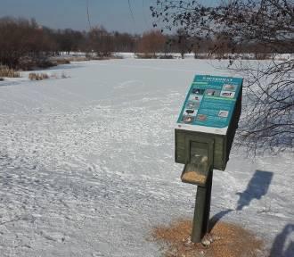 Kaczkomaty w Katowicach. Są tu mieszanki ziaren, którymi zimą można dokarmiać ptaki