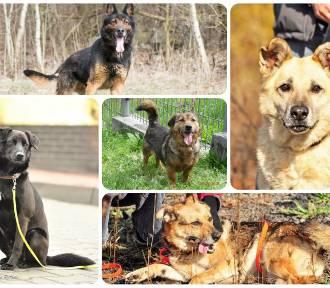 Te psiaki szukają domu! Schronisko dla Bezdomnych Zwierząt w Bytomiu zachęca do adopcji [ZDJĘCIA]