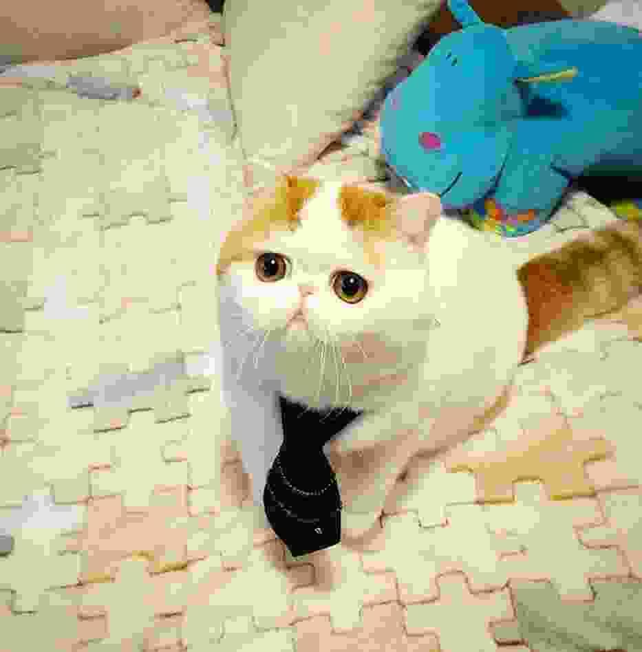Snoopy - najsłodszy kot świata.