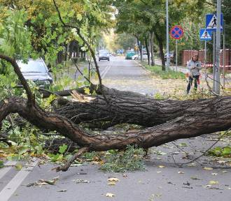 Nad Legnicą szaleje wichura. Połamane drzewa blokują ulice, zobaczcie zdjęcia