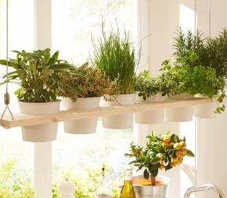 Zrób to sam – dekoracyjna i praktyczna wisząca półka na zioła