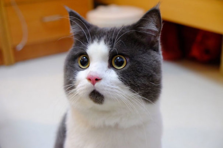 Banye - najbardziej zdziwiony kot świata.