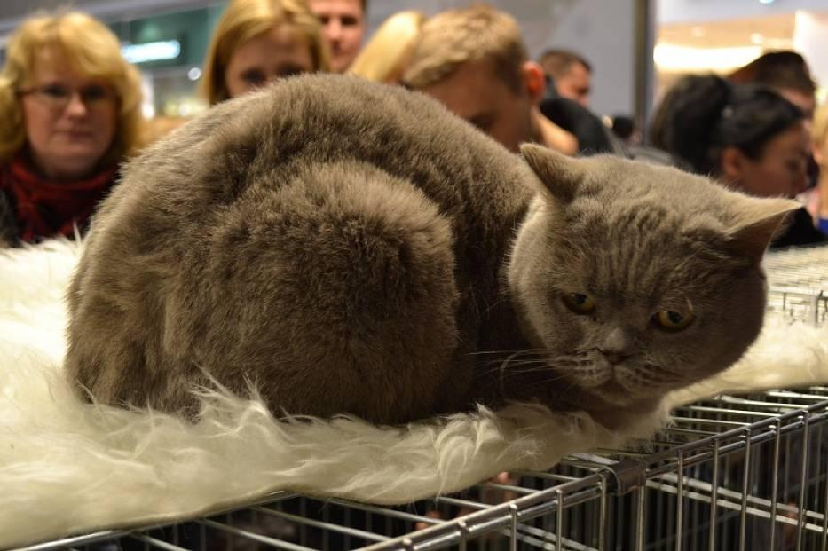 Częstochowa: Wystawa kotów
