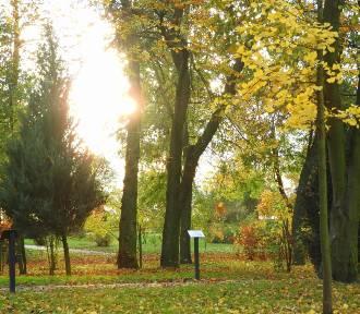 Jesienny park w Grabonogu [ZDJĘCIA]