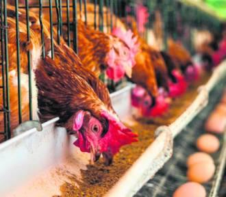 """Kupuj jajka """"z głową"""" od szczęśliwych kur!"""