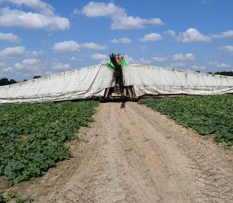 Rolnicy, hodowcy i firmy spotkali się na Kłeckim Dniu Ogórka