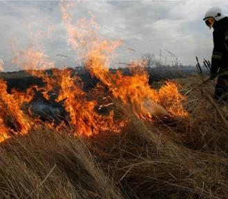 Pożary traw plagą w powiecie oleśnickim. Ile razy interweniowali strażacy?
