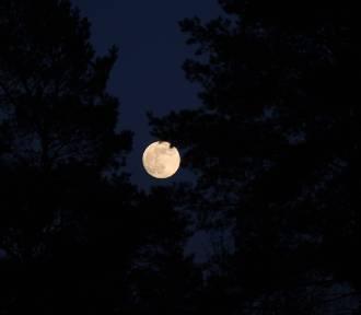 Pełnia Kwiatowego Księżyca (zdjęcia)