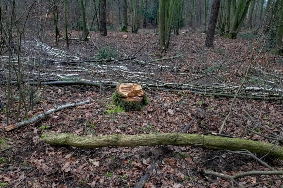 Drewno z Lasku Marcelińskiego