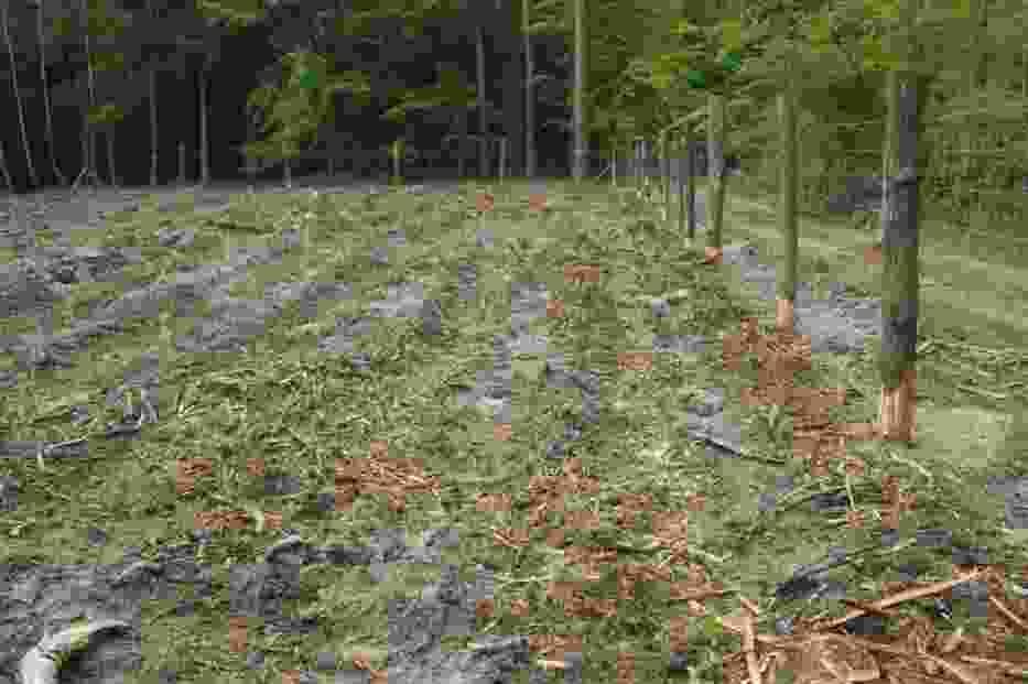 W dolnośląskich lasach pojawią się tysiące nowych drzew