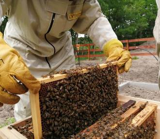 Spełniony sen o pszczołach