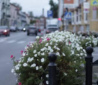Kwiaty w Nowej Soli. Zobacz, jak ślicznie wyglądają w pierwszych dniach jesieni