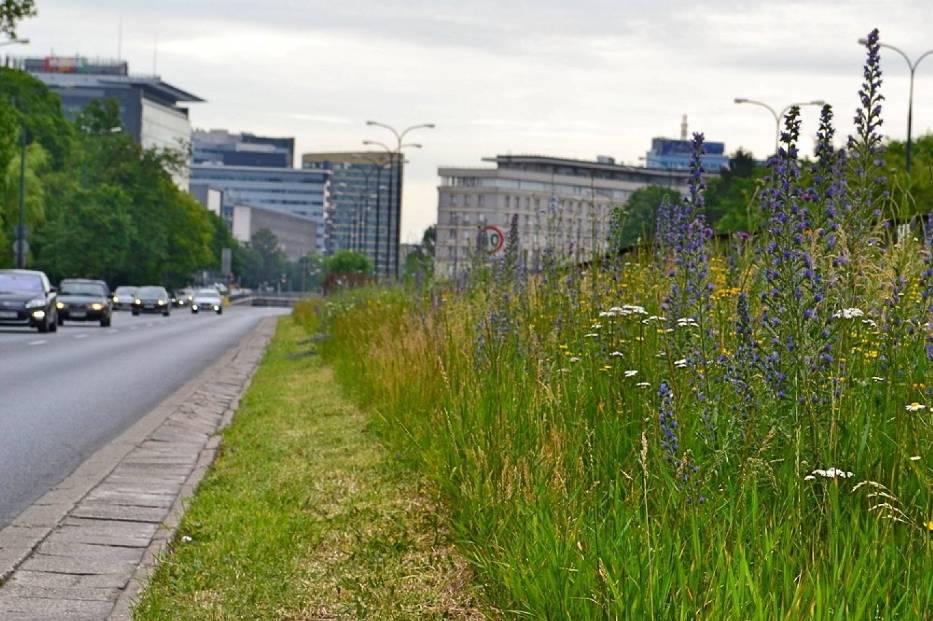 Fundacja Łąka. Zamiast równiutkich trawników proponują kwietnie łąki