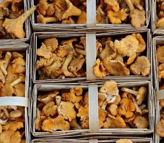Jak przygotować grzyby do spożycia? Jak je przechowywać?