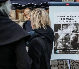 """""""Piątka PiS dla zwierząt"""". Projekt już w Sejmie. Co zakłada?"""