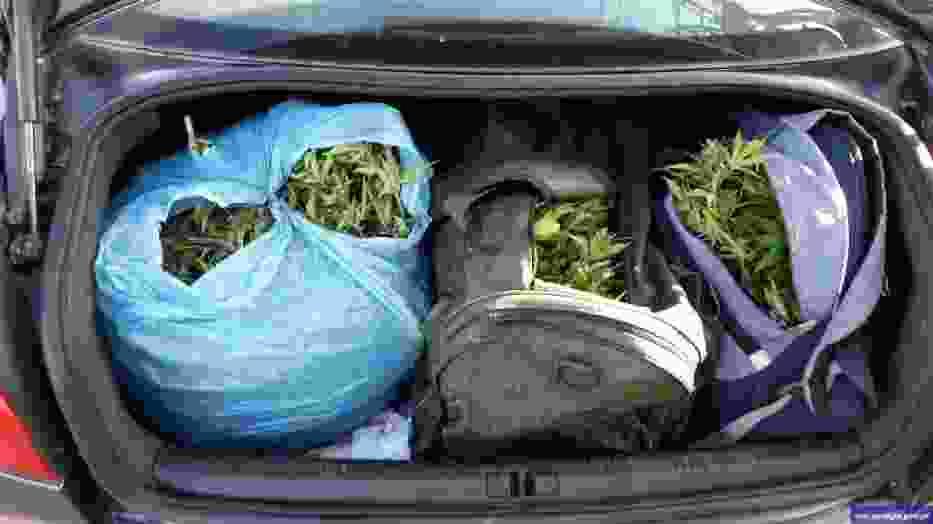 Policjanci z CBŚP zlikwidowali plantacje narkotyków