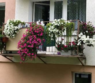 Konkurs na Najbardziej Ukwiecony Balkon - zobaczcie te balkony!