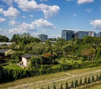 Mieszkańcy Warszawy mogą sprawdzać, które drzewa są do wycinki. To pierwszy taki system w Polsce