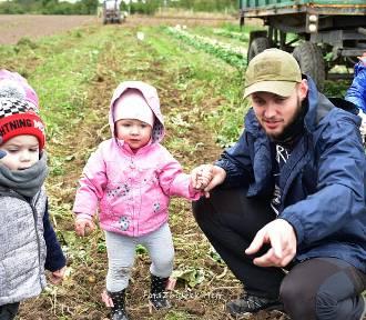 Dzień Ziemniaka w Sławoszynie: wykopki dla dzieci i dorosłych