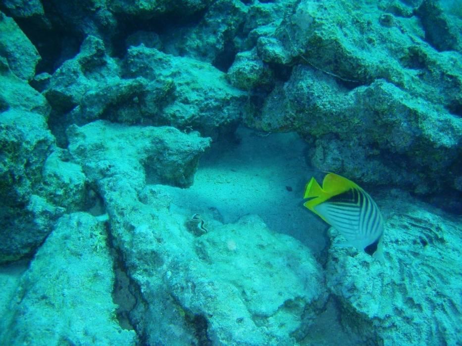 Do największych atrakcji, które oferuje Mauritius, są wycieczki łodzią podwodną