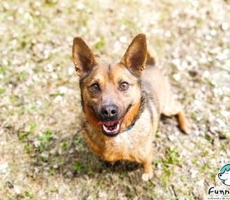 Nowych właścicieli znalazły kolejne bezdomne psy z terenu gminy Błaszki ZDJĘCIA