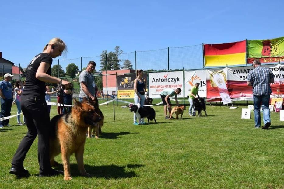 Wystawa psów w Mszanie
