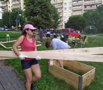 W Katowicach powstały cztery ogrody społeczne. Gdzie się znajdują?