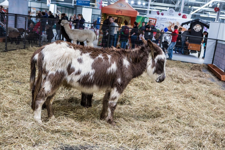 Warsaw Animals Days 2019