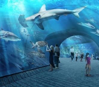 Nie ma pieniędzy na budowę gdańskiego oceanarium?