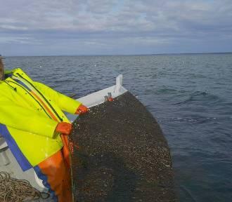 Co to za tajemniczy śluz na sieciach rybaków z Zatoki Puckiej? | ZDJĘCIA