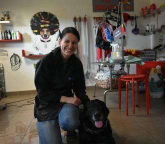 Psi fryzjer radzi jak zadbać o naszego pupila ZDJĘCIA