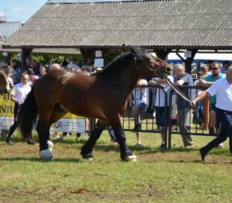 Sztumskie konie zimnokrwiste na wystawie specjalistycznej w Starym Polu