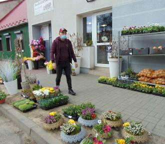 W Szamocinie i Margoninie wiosna tylko w kwiaciarniach.