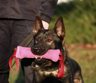 Psy wstąpiły w szeregi poznańskiej policji [ZDJĘCIA]