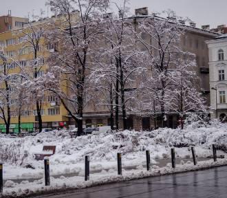 Ponad 41 tysięcy za drzewo na pl. Grzybowskim. Aukcja ratusza dla WOŚP zakończona